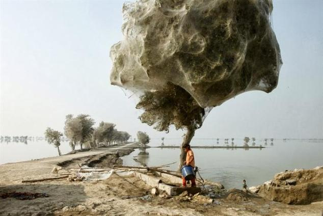 dhadha54obishwashyo02Spiderweb cocooned trees in Pakistan - 15 Things You Won't Believe Actually Exist In Nature (Small)